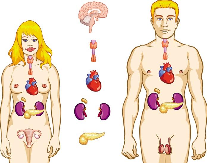 сперма гормональный фон у женщин-иш1